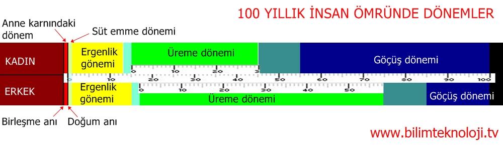 100 YILLIK İNSAN ÖMRÜNDE DÖNEMLER