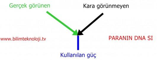 PARANIN DNA SI